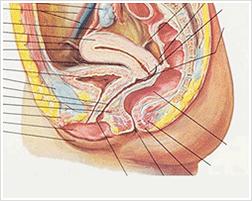 SRSにて陰茎皮弁を膣奥まで移動させるのは困難