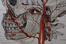 顔面動脈と外頸動脈