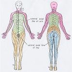 神経支配領域